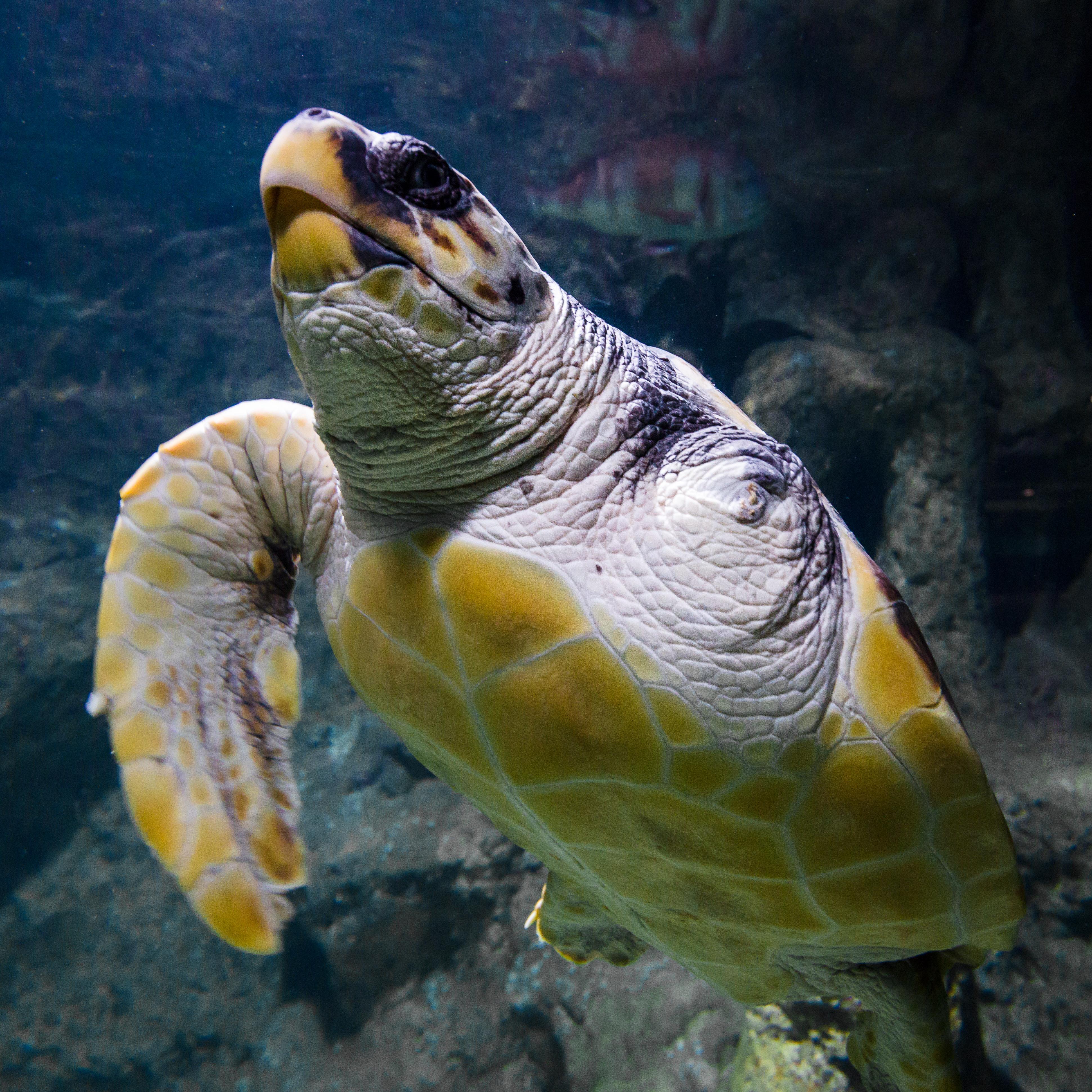 Image of Tickets for the Roquetas de Mar Aquarium