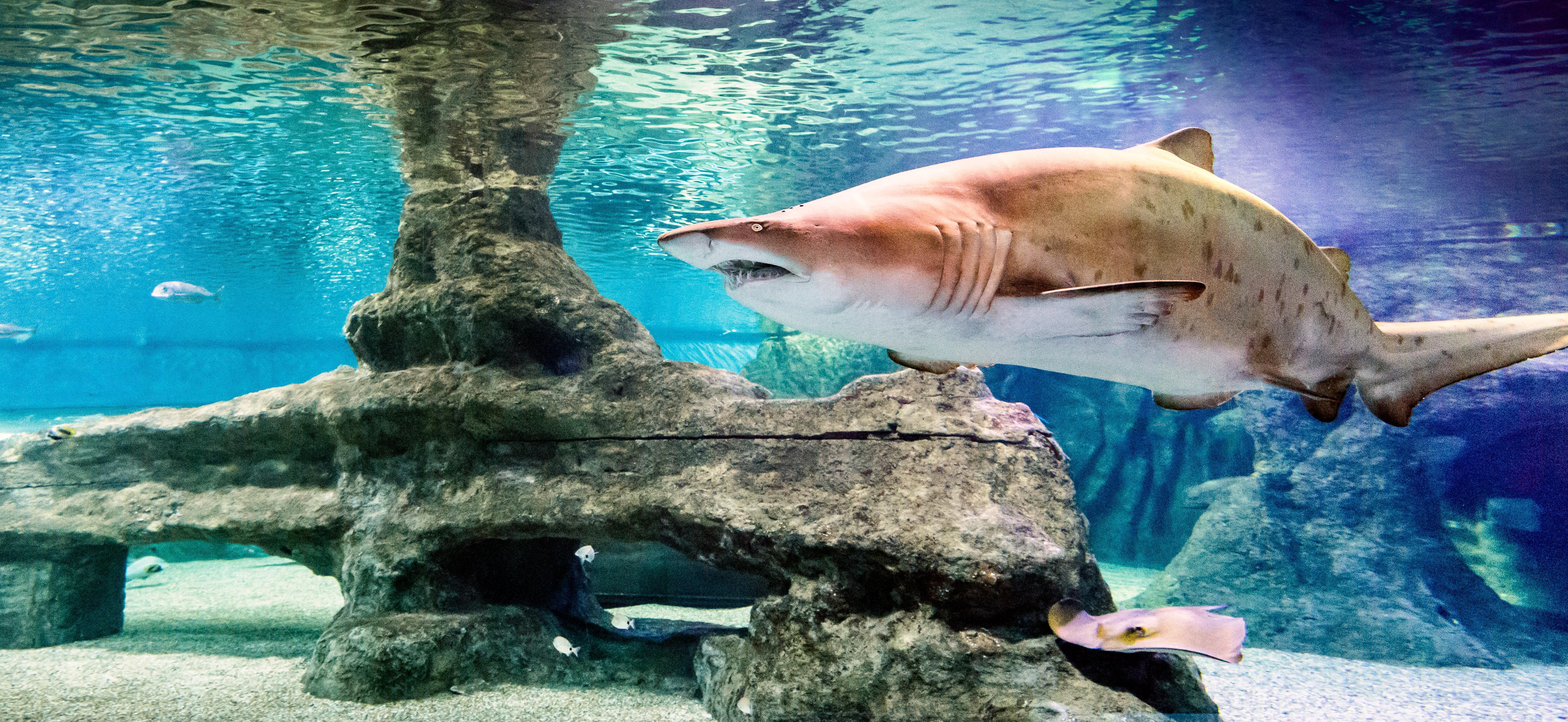 Tickets for the Roquetas de Mar Aquarium