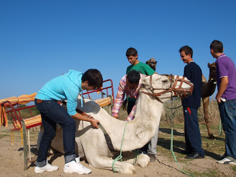 Image of Camel ride